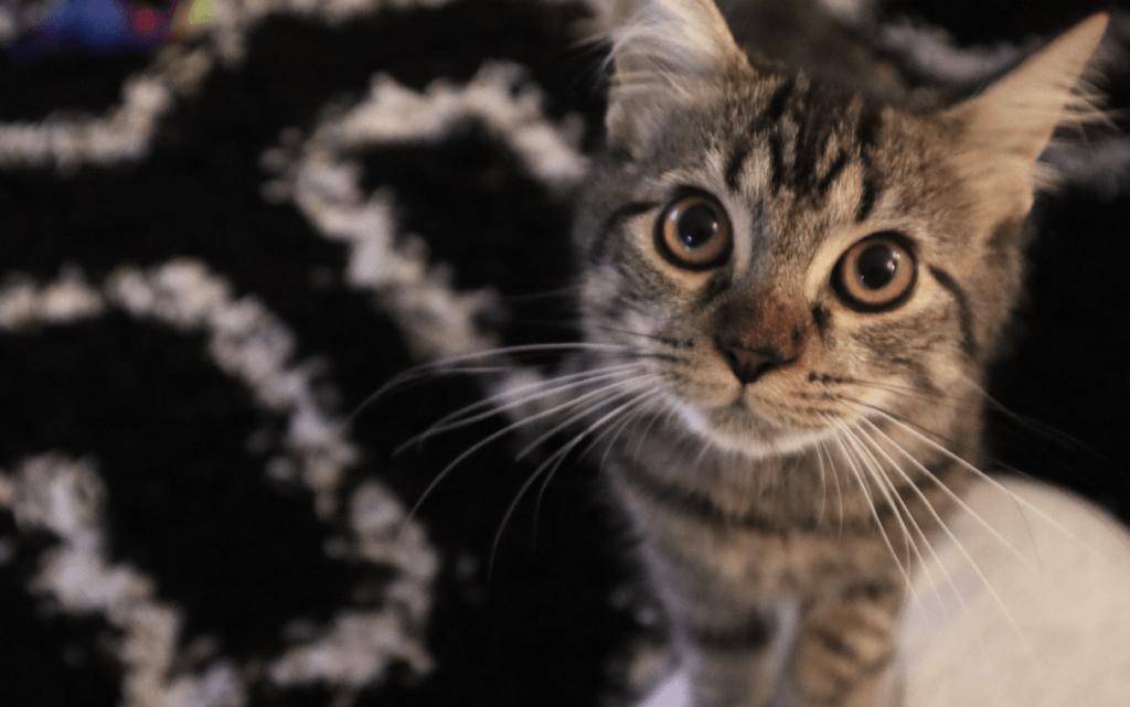 katzenkrankenversicherung katzen krankenversicherung katzen op versicherung 1024x641 - Katzenkrankenversicherung
